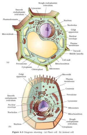 NCERT Class XI Biology: Chapter 8 – The Unit of Life