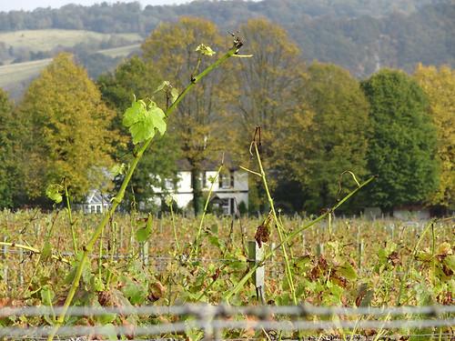 Vineyard views 01