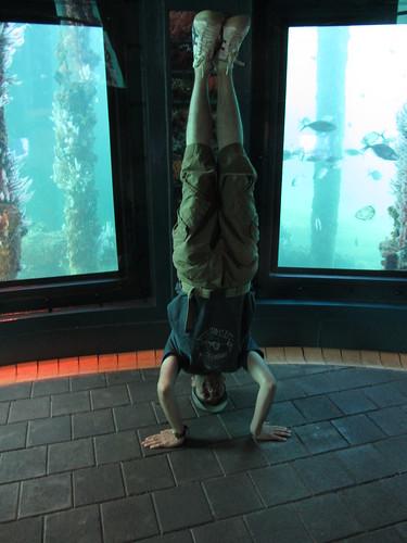 12. busselton jetty underwater observatory headstand