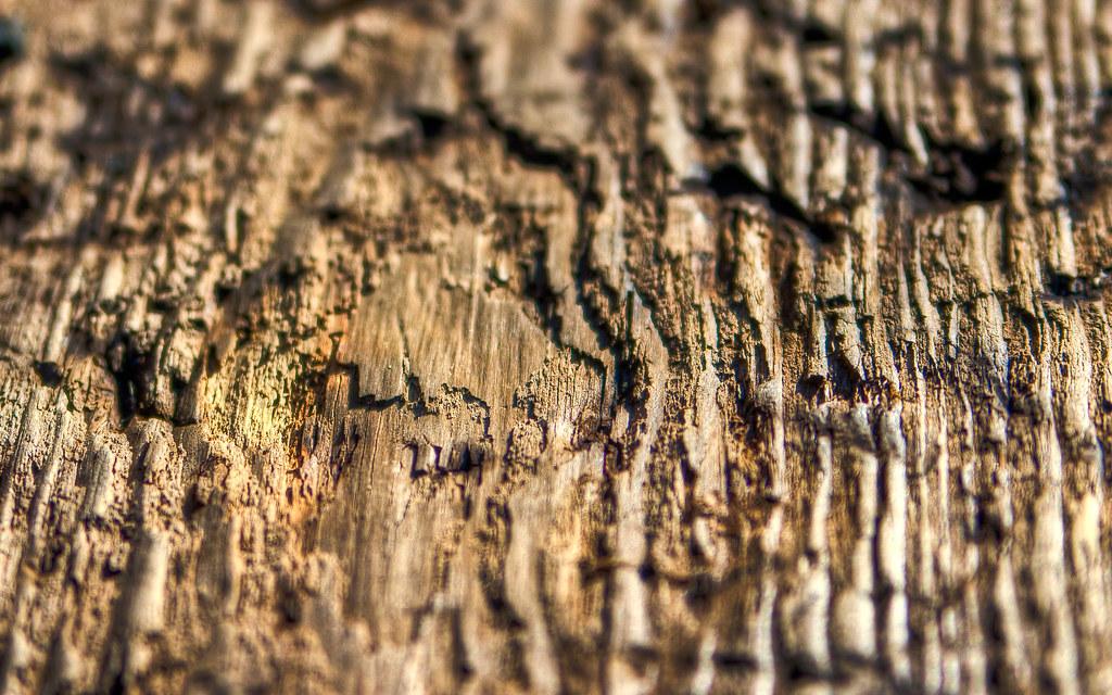 Driftwood Texture