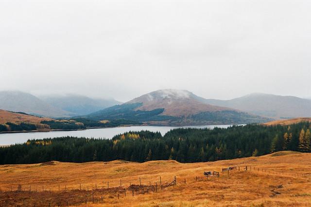 highland mustard