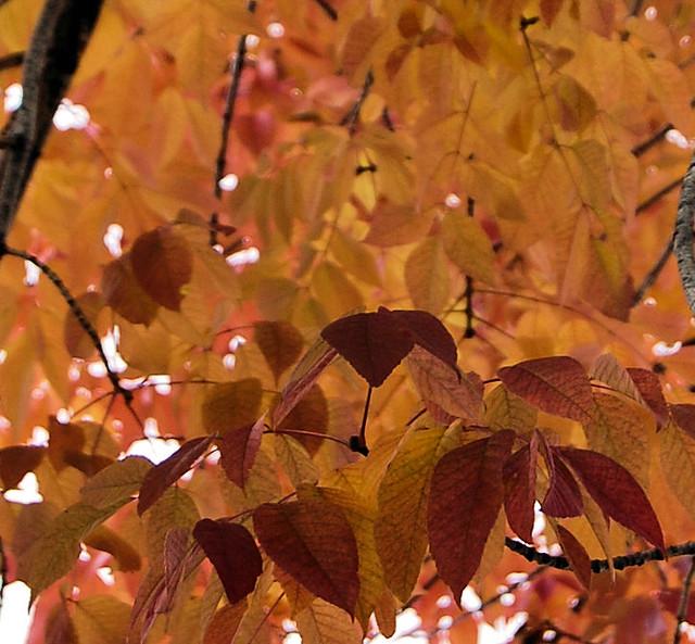 Fall Orange (1)a