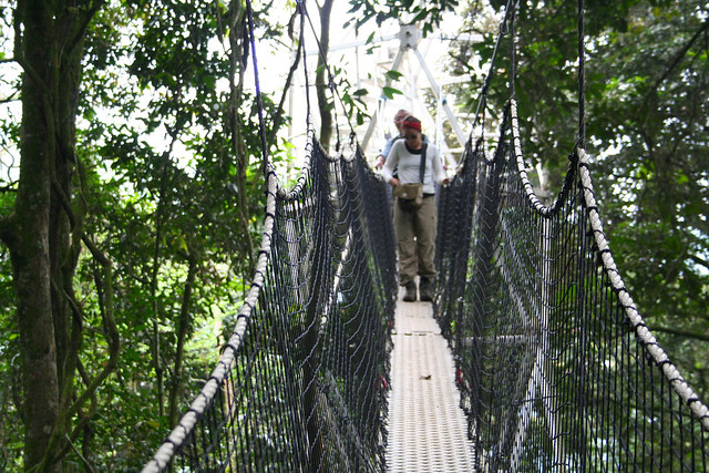 canopy walk at Nyungwe National Park