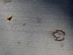 Fallen leaf and leaf print