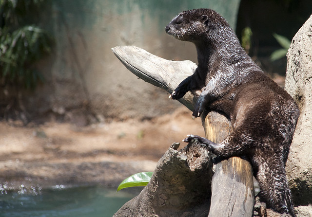 a wet brown otter is draped across a log in the sun. Water and a sandy shore are visible in the background.