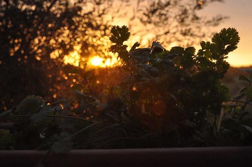 amanhecer#2