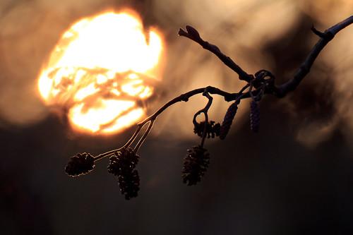 sunlight 1