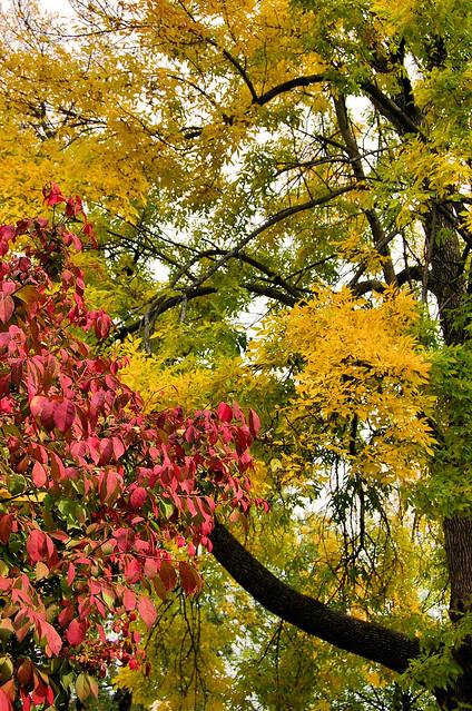Fall my driveway (1)