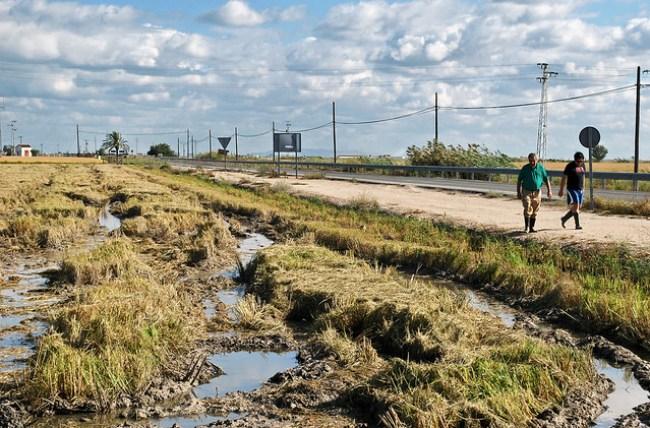 Un arrozal fangueado tras la siega en La Puebla del Río, Sevilla
