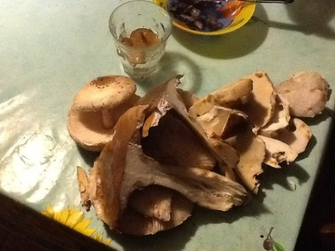 Mushrooms vari?©s
