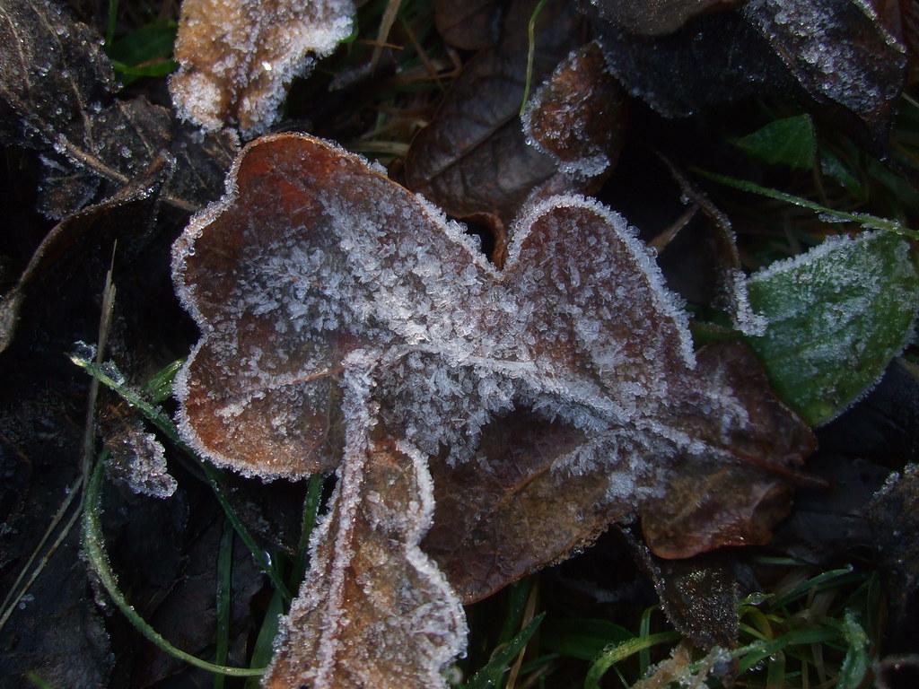 Frosty Oak.