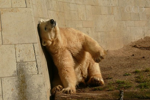 Relaxed Bear...