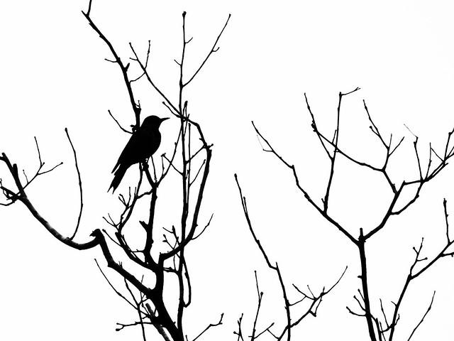 Birding Gemini Springs November 2012 » Powered by Birds