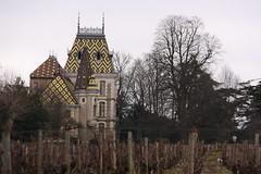 Aloxe Corton, Burgundy, France
