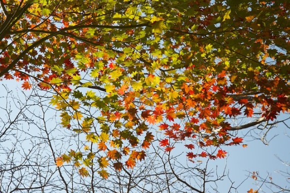 121103_coloredleaves02