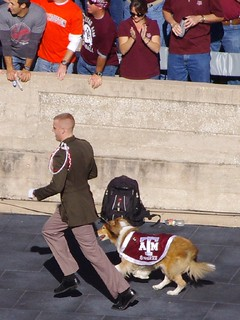 Reveille, Texas A&M Mascot