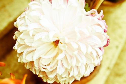 Roomflower