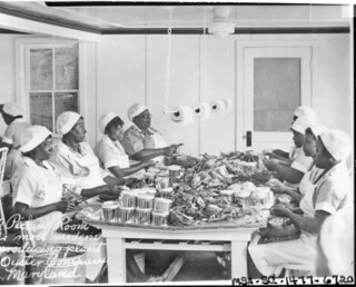 Women Picking Crabmeat in MD: 1940 ca