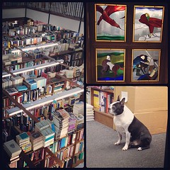Afternoon at the bookstore.