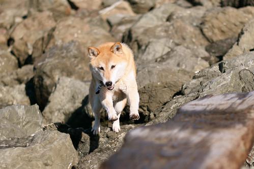 13 December 2012 Bowdu among the rocks