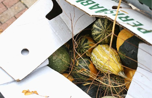 Box of gourds at Circleville Pumpkin Show. Copyright Jen Baker/Liberty Images; all rights reserved.