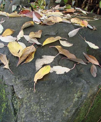 fallleavesrock
