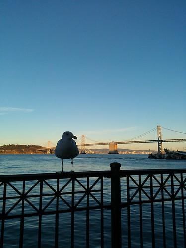 seagull watching us eating empanadas