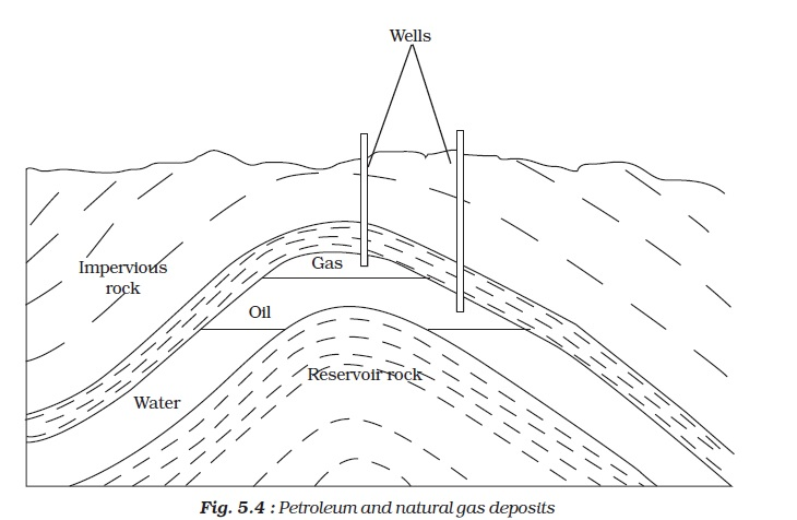 NCERT Class VIII Science Chapter 5 Coal and Petroleum