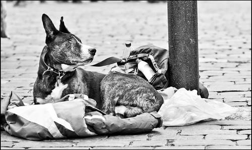 Prag / Straßenhund / Street dog