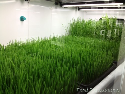 micro greens - Living Produce Aisle