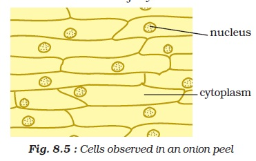 ncert class viii science chapter 8 cell structure and functions | aglasem  schools