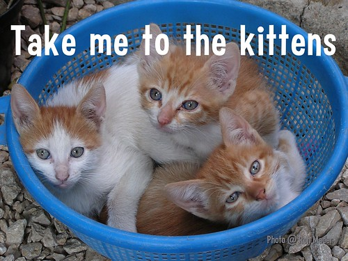 Flickr Lessons: Take me to the kittens