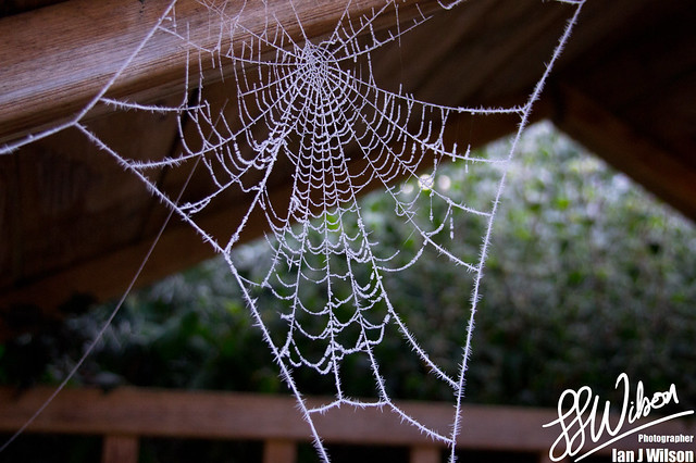 Frozen Cobweb – Daily Photo (15th December 2012)