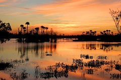 Orlando Wetlands Park Sunrise