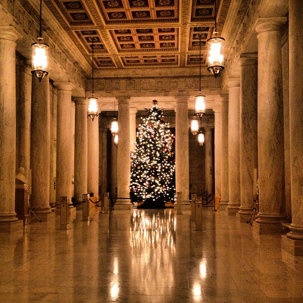 tree inside the Supreme Court