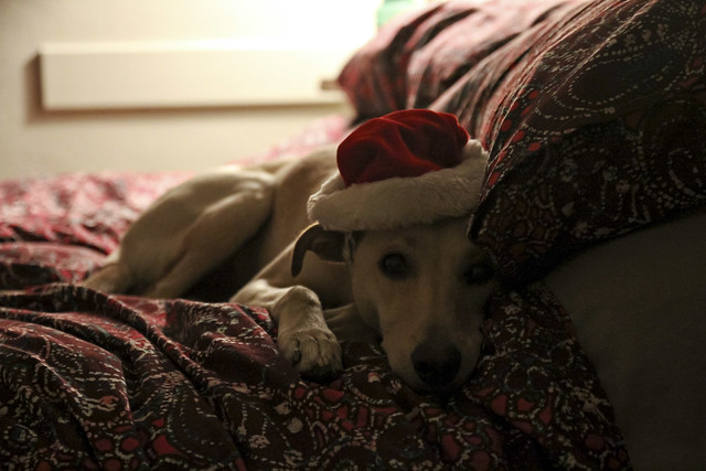with her santa hat
