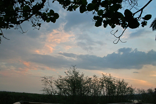 sunset with the fig tree at Ruzizi Tented Camp, Akagera