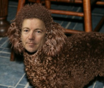rand poodle1