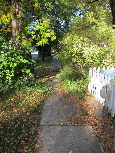 Sidewalk Jungle