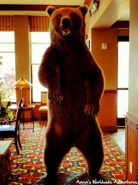 Reggie the Bear