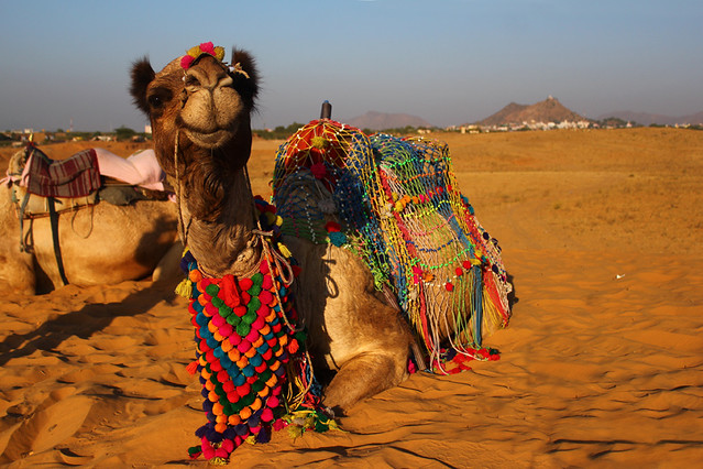 Desert - Pushkar