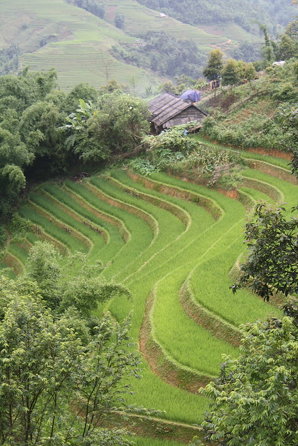Rice Terraces in Sapa, Best Hiking in Vietnam