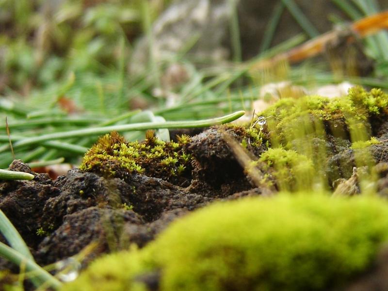 moss in garden macro