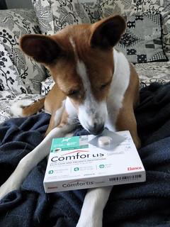Stinky Comfortis
