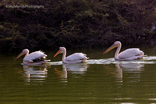 IMG_2939 by ShubhenduPhotography