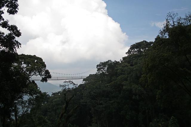 canopy walk view