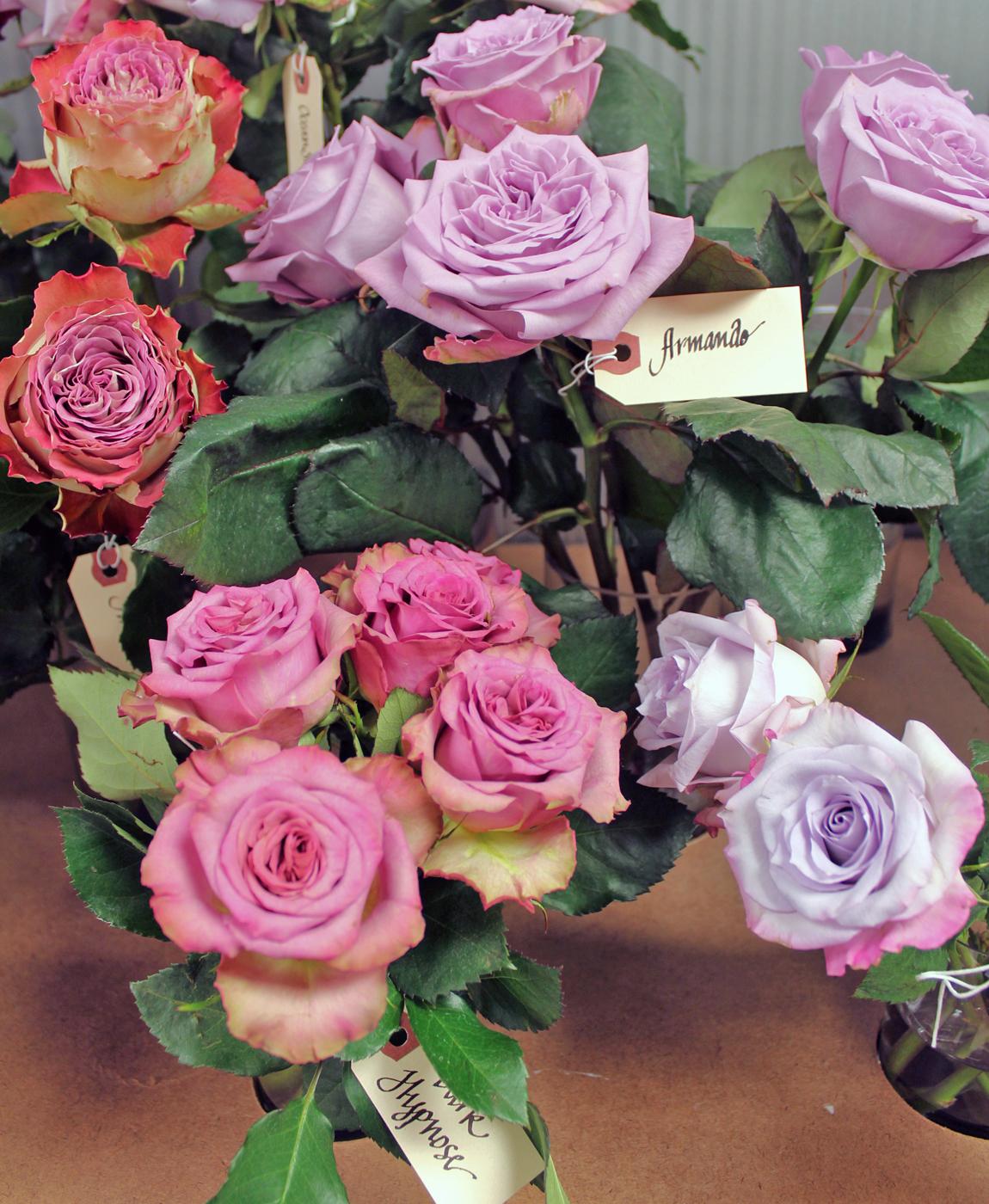 harvest-rose-8