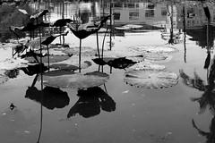 #losangeles #echopark #reflection #blackandwhite
