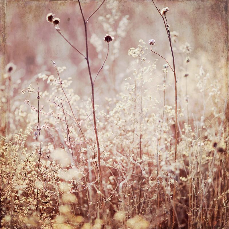 Kansas Landscape Photography Trina Baker