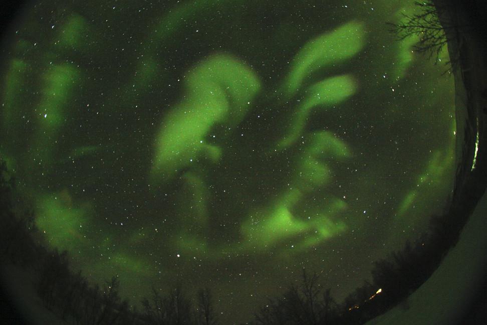 Un cigno verde nel cielo